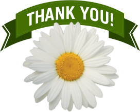 Thank you and a daisy