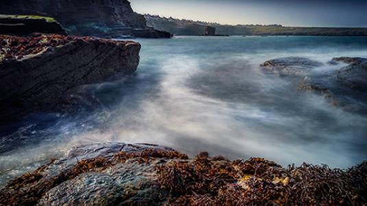 rocks and seaweed