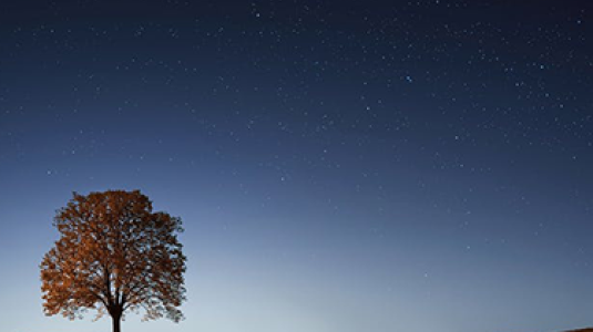 tree with stars